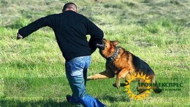 Photo of Докога тоягата ще играе според кучето в България