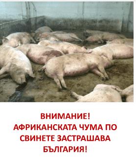 Във връзка с Африканската чума по свинете Общинската епизоотична комисия проведе заседание