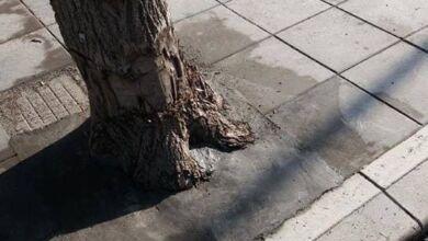 Photo of Зазидаха дърво  в Троян