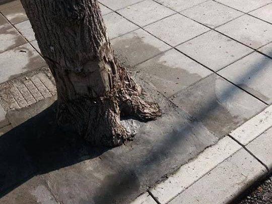 Зазидаха дърво в Троян